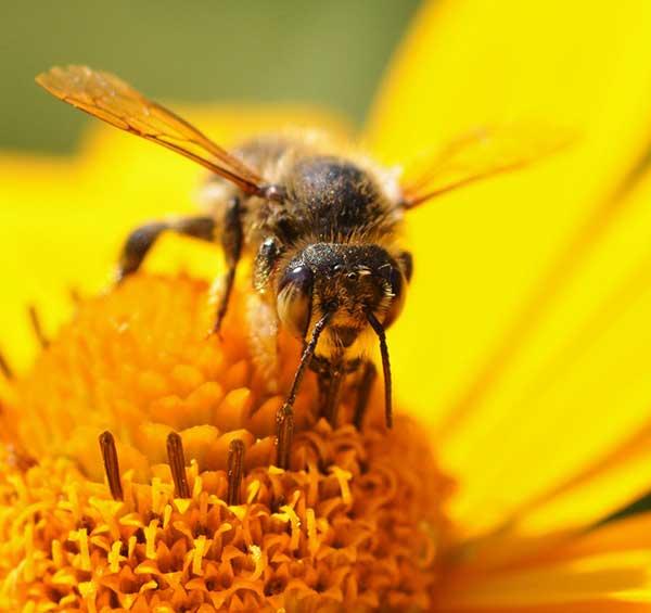 Imkerei und Bienen - am Dienstag, 15. Mai 2018 (19.30 Uhr)