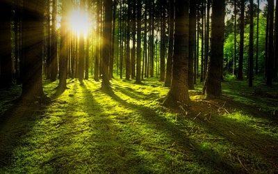 Leistruper-Wald – 15. Juni 2020