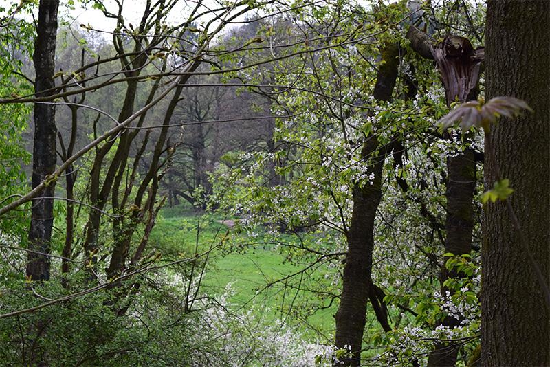 Bedeutung der Wälder